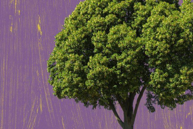 Umwelt und Klima