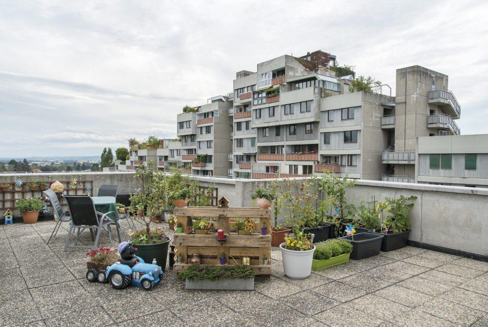 Ana Jeinic Grazotopia Terrassenhaussiedlung